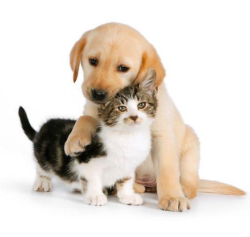 """Na zdjęciu napis """"otwórz serducho dla zwierzaka"""" nad napisem pies i kot"""